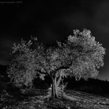 BANCALES_MORALET-696-ene-09-2016
